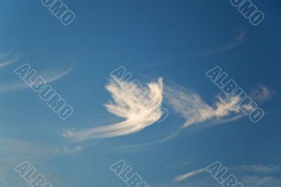 Dove-shaped cloud