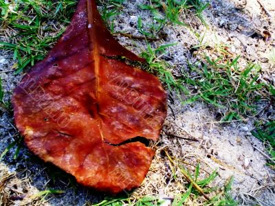 dry leaf impermanent life