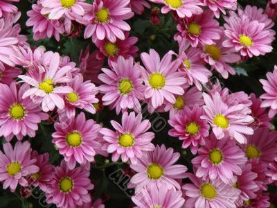 detailed close-up background of fresh flowers