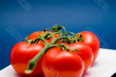 five tomatoes on stem with blue background