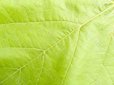 Vegetative background