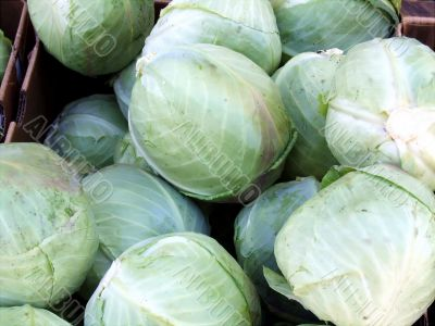 Need Some Cabbage