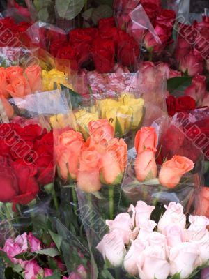 Rose for Sale