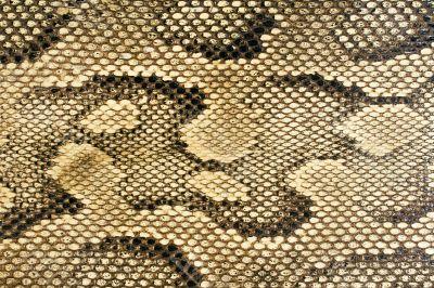 Snakeskin Texture