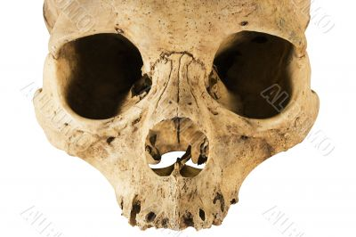 Skull w/ Clipping Path - Front View