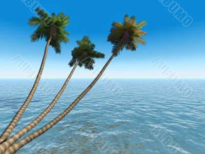 palms on an exotic tropical beach