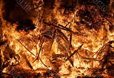 Forest Fire - Close View