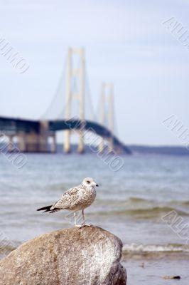 bridge seagull