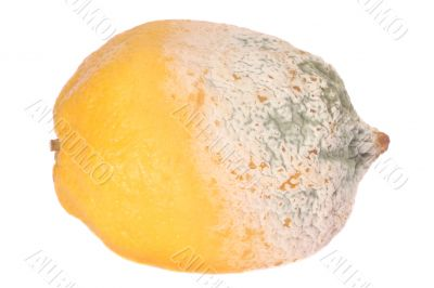 Lemon fruit half-damaged