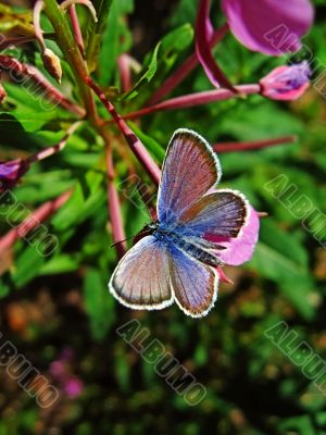 butterfly on forest flower