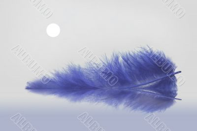Blue feather`s moonlight