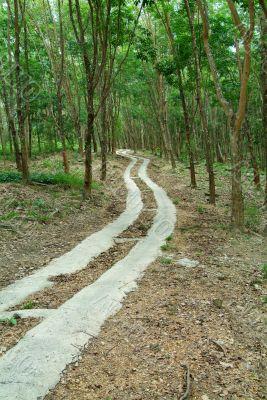 Road through a rubber plantation