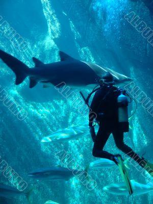 scuba diver and shark