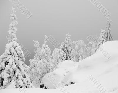 Snowy Scenery