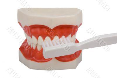 dentures, brush your teeth