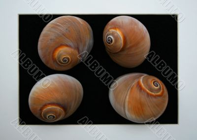 Digital Shells