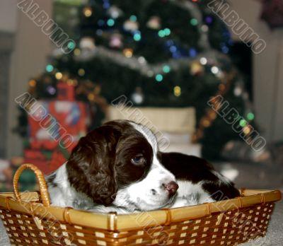 Best Christmas present