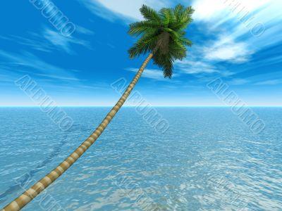 palm on an exotic tropical beach