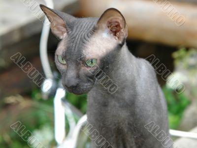 serious nice cat