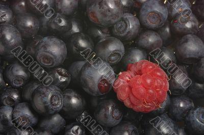 ripe bilberries and a raspberry