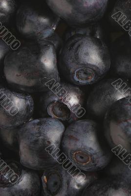 macro of bilberries