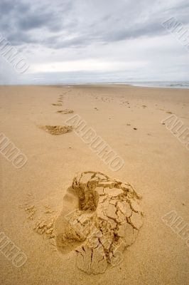 footprints on a wild beach