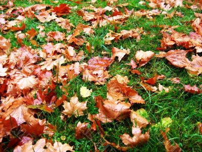 autumn leaves and grass
