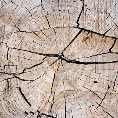 Textures – Tree Stump