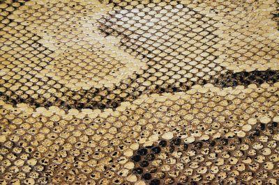 Textures – Snakeskin 4