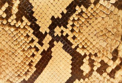 Textures – Snakeskin 5