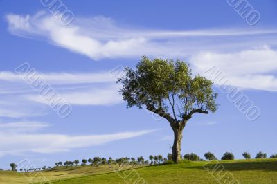 lonely trees 6