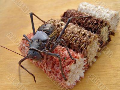 bug armor