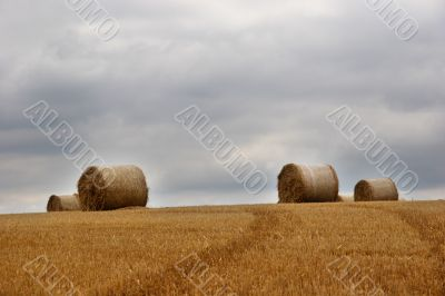 Hay bails in field 1