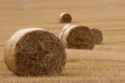 Hay bails in field 3