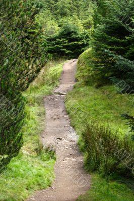 Walkway through forest in scotland