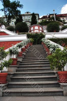 Steps leading up with potted plants