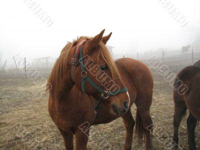 Horse on a frosty feedlot