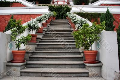 Steps with potted plants