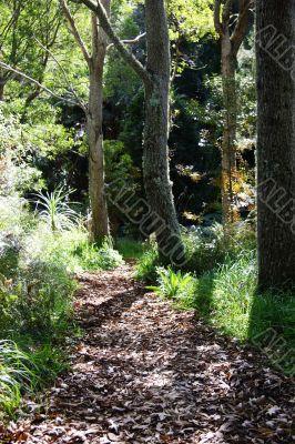 leafy walkway in forest