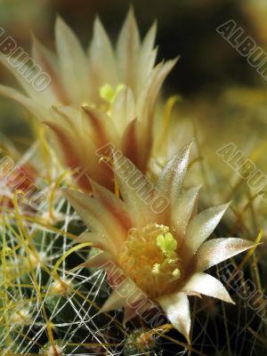 Rare flowerses