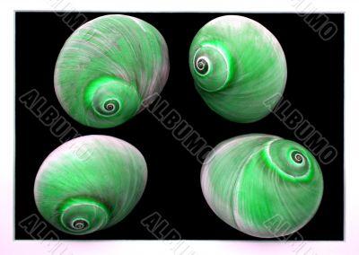 Green Sea Shells