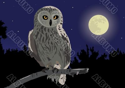 owl sitting on a branch by a moonlight night