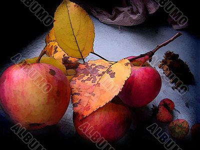 Fruits of ripe apples