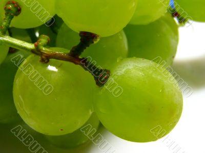green and juicy grapes
