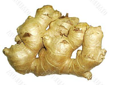 ginger herb