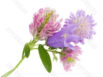 Bouquet from field flowers