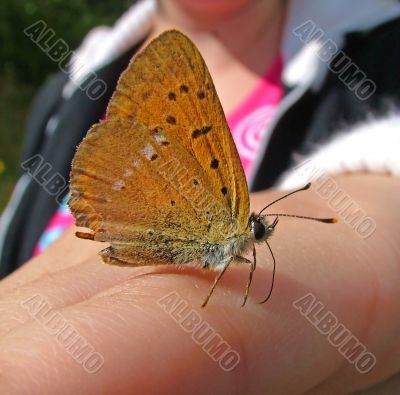 Butterfly on a hand