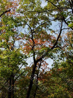 Autumn woods, nearest Samara city