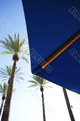 Umbrella Under Palms