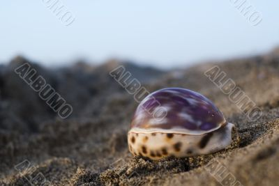 Shell in the beach